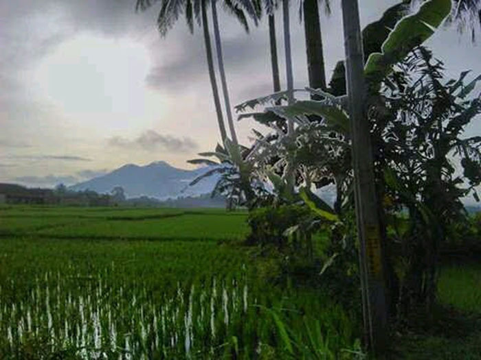 Tree Palm Tree Mountain Rural Scene Rice Paddy Fog Agriculture Social Issues Field Environmental Issues The Great Outdoors - 2018 EyeEm Awards