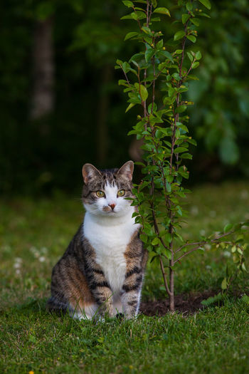 Free Green Tree Animal Themes Beauty In Nature Cat Cat Lovers Domestic Animals Domestic Cat Feline Garden Grass Growth Mammal Nature Pet Watching Pet Portraits