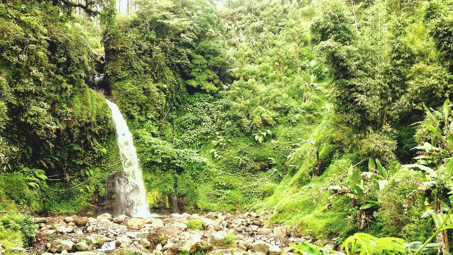 Waterfall Waterfall_collection Savetheearth Gucibumijawa Airterjun Nature_collection