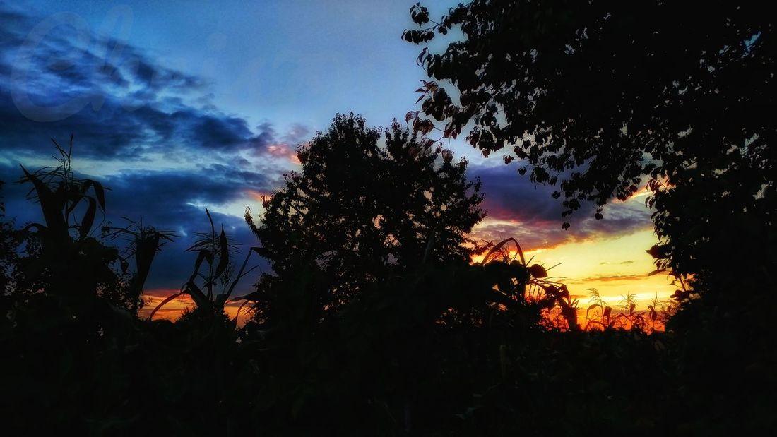 Tree Sunset Tree Area Silhouette Sky Cloud - Sky Dramatic Sky Romantic Sky Cloudscape Storm Cloud Moody Sky Atmospheric Mood Overcast
