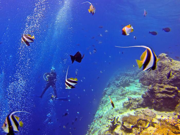 Fish And Man Swimming In Sea