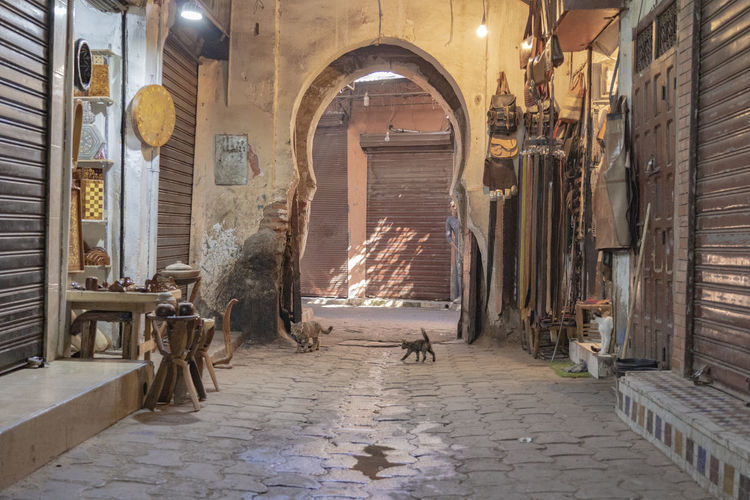Arch Architecture Building No People Day Market Market Stall Marketplace Cat Cats Marrakesh Marrakech Quiet Midday Sunlight And Shadow Built Structure Indoors  Alleyway Alley Cat Ceiling Spirituality Religion Illuminated Direction Archway