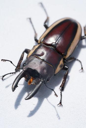 Beetle Beetles Life Insect Invertebrate One Animal Animal Wildlife Close-up Animal Body Part No People