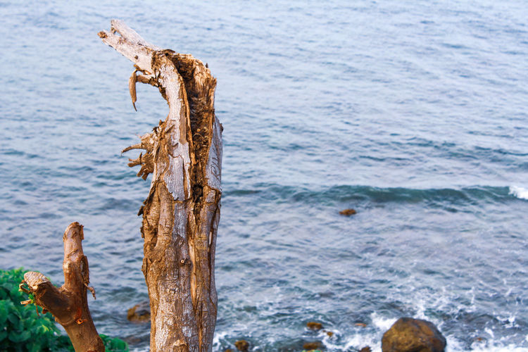 Driftwood on wooden post in sea