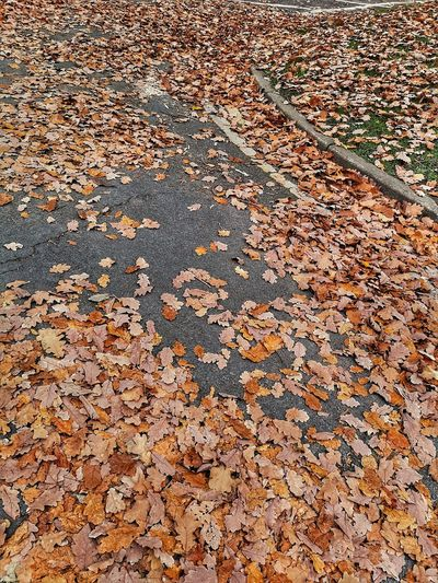 "Just ""Leaf it to me""... Winter Leaf 🍂 Leaf Leaves Autumn🍁🍁🍁 Oak Leaves Oak Brown Road Marking Road In Winter Fallen Leaves Autumnal Mood Tarmac Road Yellow Line Can You See It? Backgrounds Full Frame Textured  Pattern Close-up Dried Surface Dead Plant"