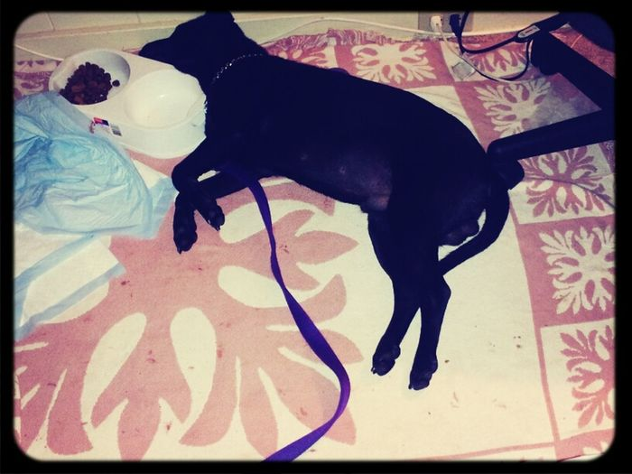 "Our ""son"" fell.asleep next to his food and water bowl , lol"