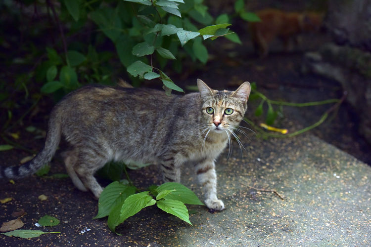 Portrait of tabby cat on plant