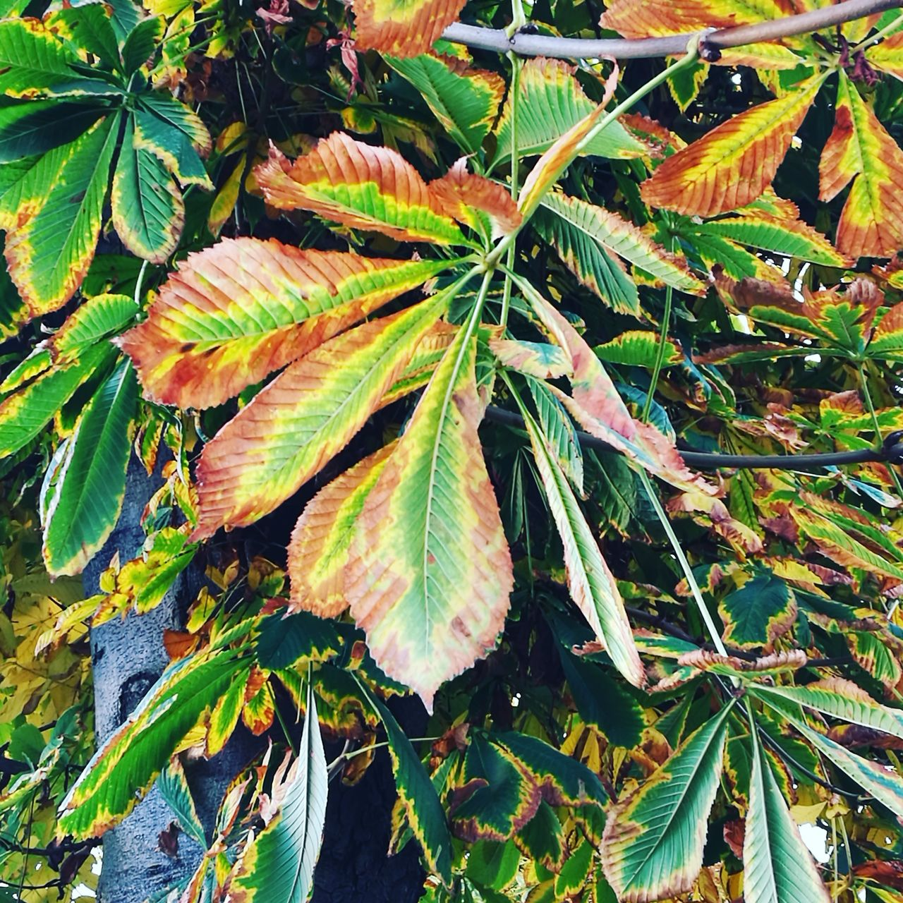 leaf, green color, plant, growth, nature, no people, day, outdoors, beauty in nature, sunlight, close-up, fragility, freshness