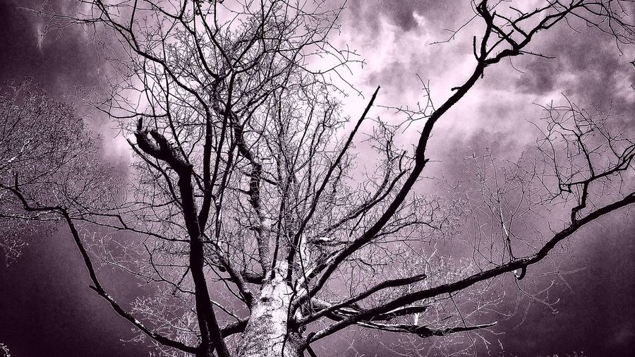 PhonePhotography Photographer Photooftheday Photography Pitureoftheday Picoftheday Pink Color Purpletree Forest Bare Tree Branch Tree Winter Nature Beauty In Nature Cold Temperature Landscape Outdoors