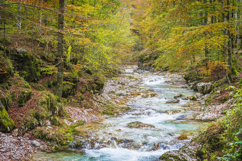 River flowing amidst trees in forest during autumn