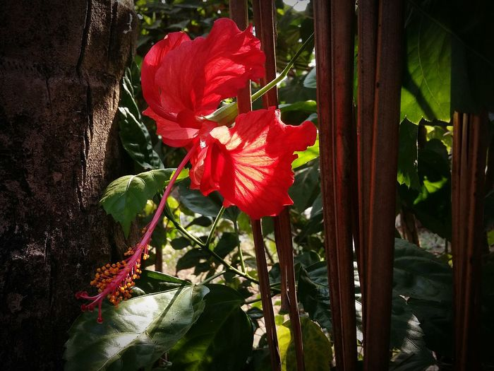 Showcase April Summer Views Sunny Day 🌞 Flower Porn Red Flower At Its Best Morning Light Brightcolors Coconut Trees Coconut Leaf Light Trails My Home Garden With Love From India💚