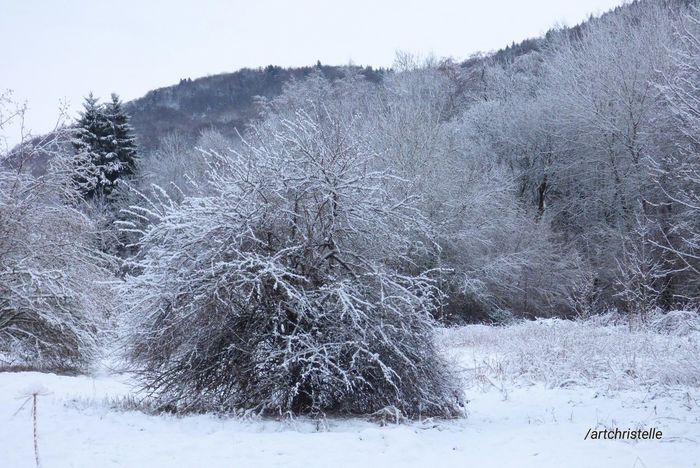 hivers Winter Snow Cold Temperature Nature Beauty In Nature Carte Postale Freshness Snowing Sky Shades Of Winter