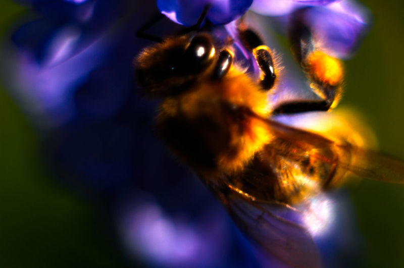 Animal Themes Beauty In Nature Close-up Flower Honey Bee Nature Selective Focus Wildlife