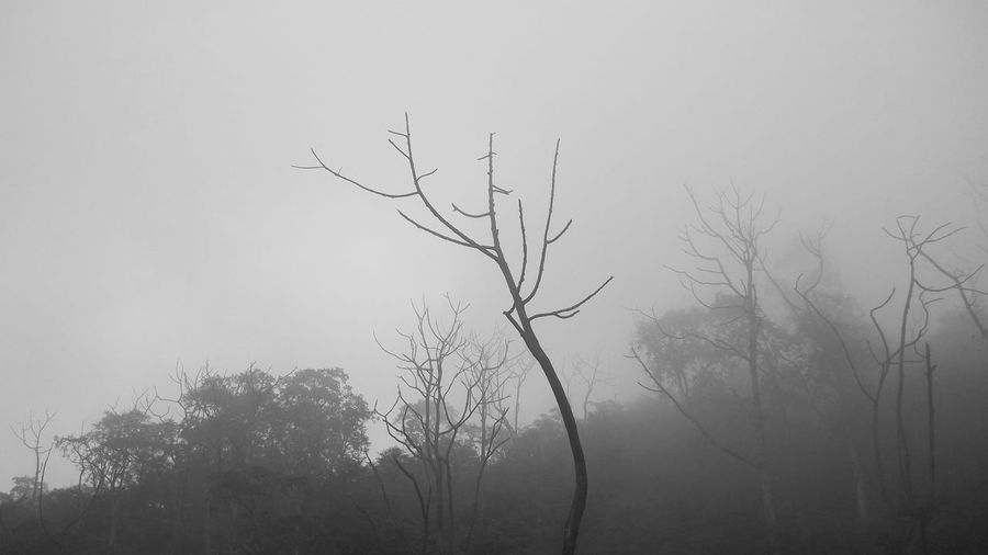 Nature Misty Forest Tree Tree Trunk Bare Tree Beauty In Nature Branch Day Dead Tree Landscape Lone Misty Landscape Misty Lanscape Misty Mornings Misty Mountains  Nature Nature Misty Mountain No People Outdoors Rijall Rijall Blues Rijallblues Sky Tranquil Scene Tranquility Tree Tree Trunk