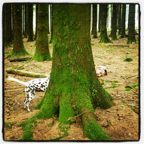 New creature discovered In Devon woods...