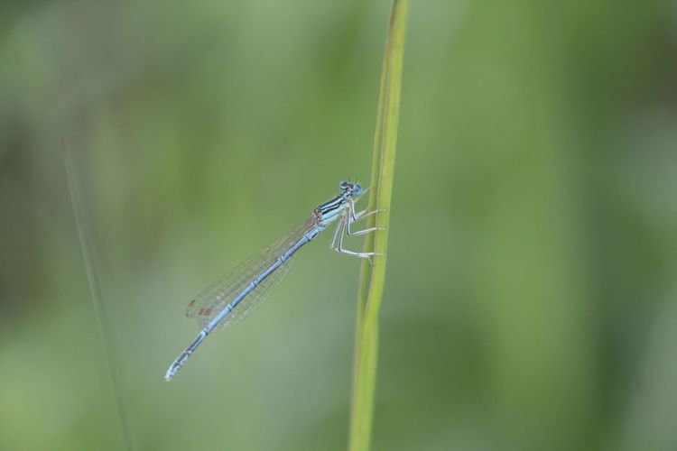 Close-up of damselfly on grass