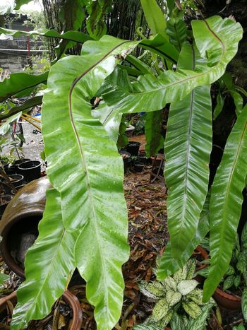 Long Leaves Leaf Green Color Nature Growth Day Outdoors No People Beauty In Nature Freshness Close-up Plant