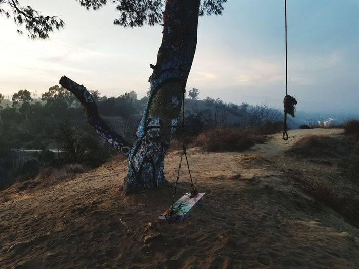Tree Swing at