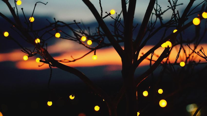 Tree with light Nature No People Beauty In Nature Sunset Sun Close-up Sky Growth Illuminated Outdoors Sea Tree Branch Water Day