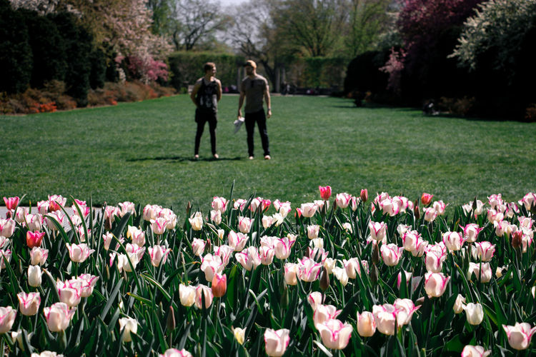 Rear view of man and pink tulips in park
