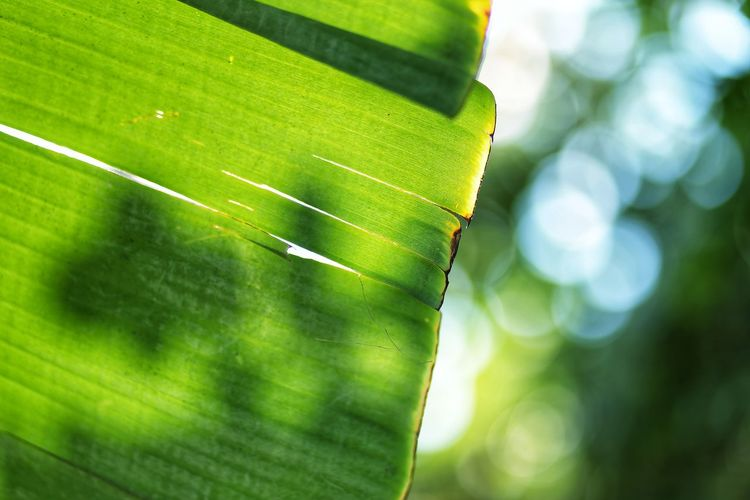 Low Angle View Of Green Leaf