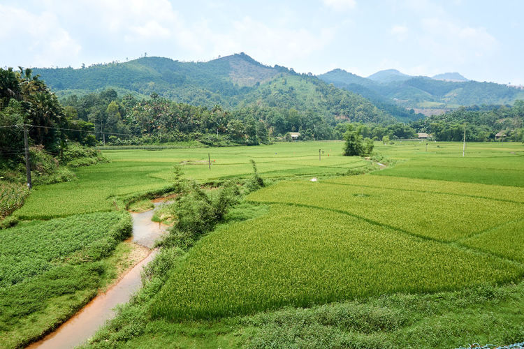Mountain Forest Landscape Travel Tree Hill Field Vietnam Hà Giang Travel Destinations Holiday Freedom Farming Rice Field Rice Paddy Rain Season Monsoon Cloud - Sky Clouds And Sky Sky Green Color Green Plant