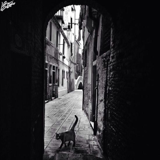 pussycat in Venice Blackandwhite IPhoneography Black And White Venezia