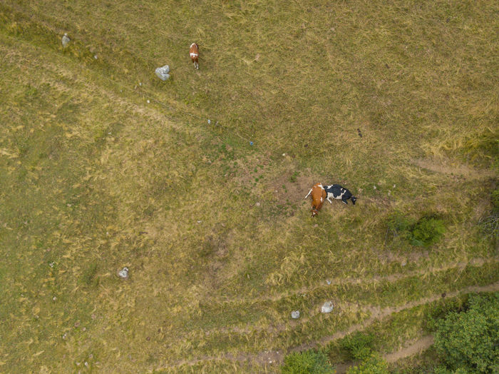 High angle view of a horse on field
