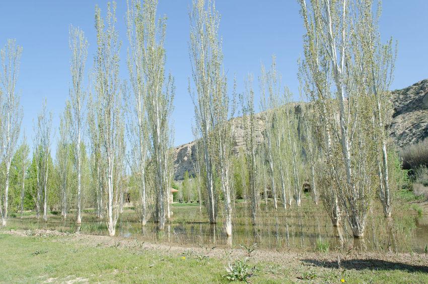 Galacho de Juslibol, Zaragoza,. Day Galacho Juslibol Macro Marzo Nature No People Outdoors Zaragoza 2015  Eddl