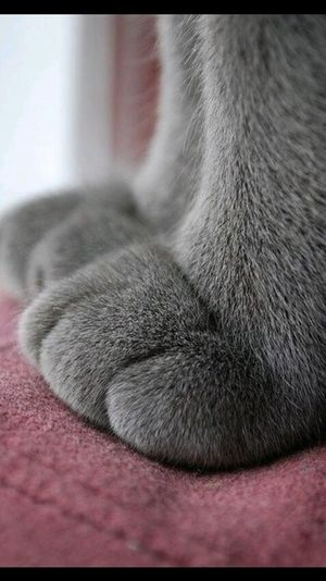 cats paws❤ Relaxing
