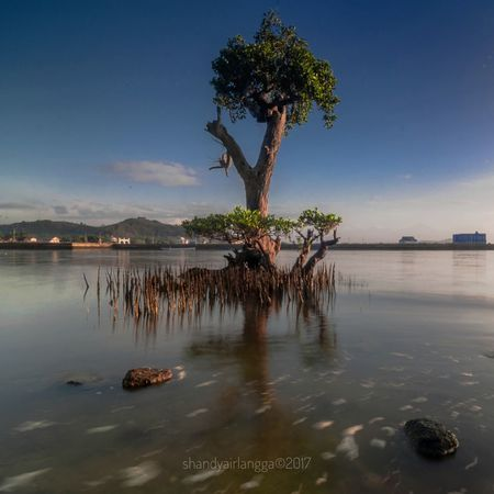 Reflection Water Landscape Nature Outdoors No People Sky Day Sunrise Mangrove Plant Mangrove Roots Mangrove Trees Mangrove