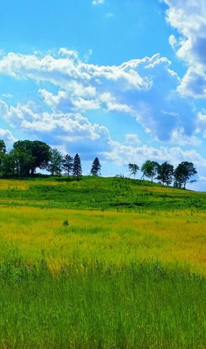 MEADOW IN SUMMER Essence Of Summer Meadow Meadows Meadowlands Summertime Hill Simple Scenery Tranquil Scene Peaceful Nature Nature Photography Trees Grassy Field And Sky Nature Preserve Lake Barrington, Illinois USA Landscape Landscapes With WhiteWall Landscape_photography Beauty In Nature Beautiful Nature Green Color Phone Camera Mobile Photography