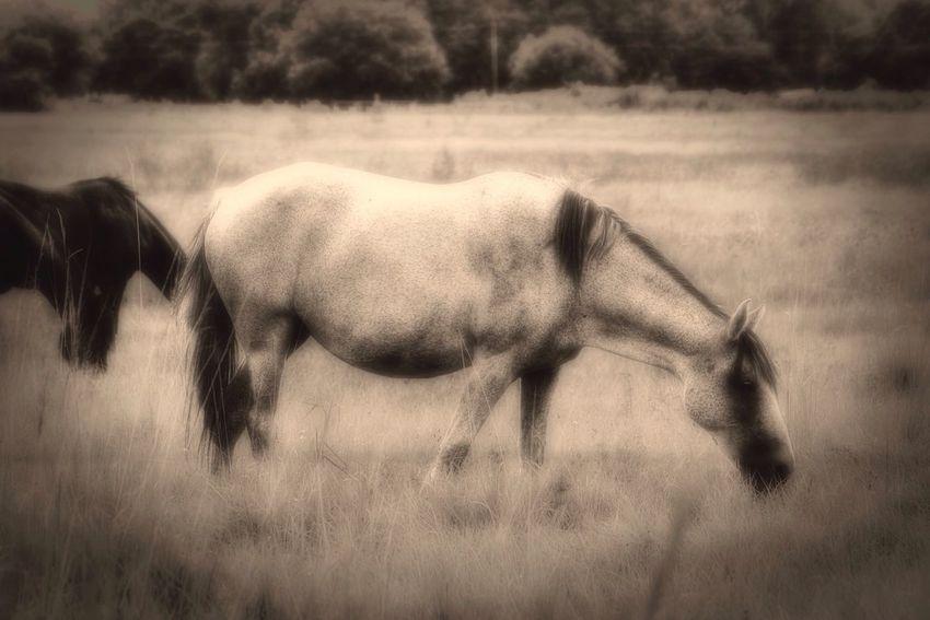 EyeEm Best Shots - Black + White Tadaa Community EyeEm Nature Lover Horse