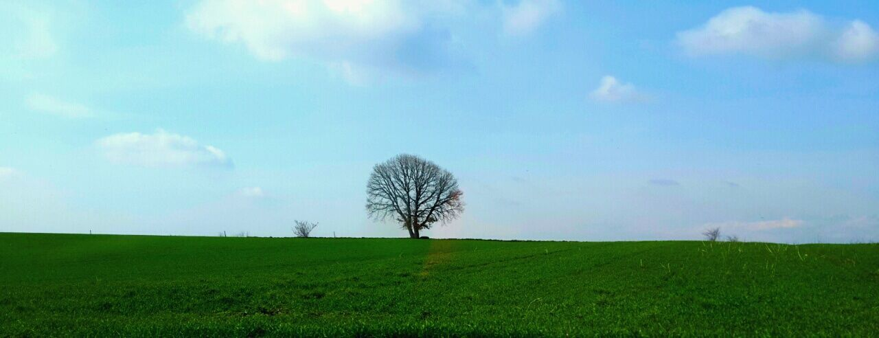Lonely tree Tree Sky Blue Green Clouds Relaxing Landscape Taking Photos Check This Out