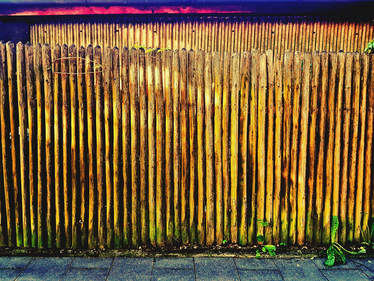 outdoors, day, growth, no people, nature, plant, architecture, corrugated iron, sky