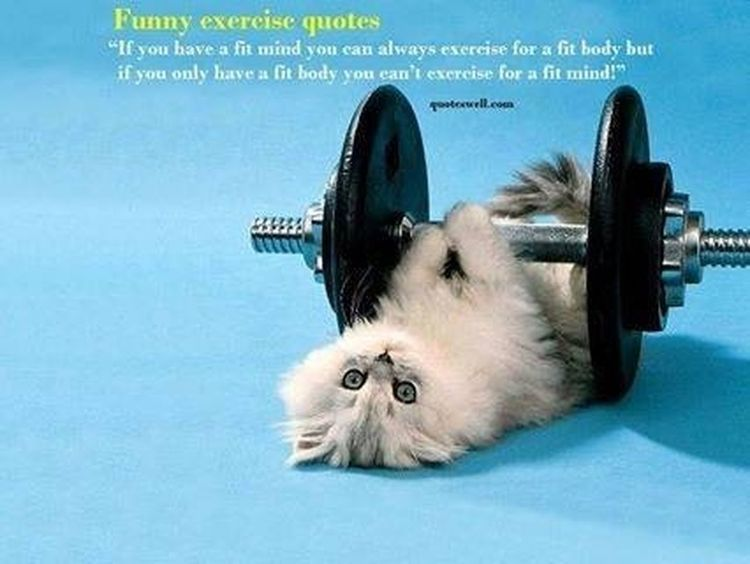 Exercise Cool Cat - Meow Funny Pics Enjoing Life
