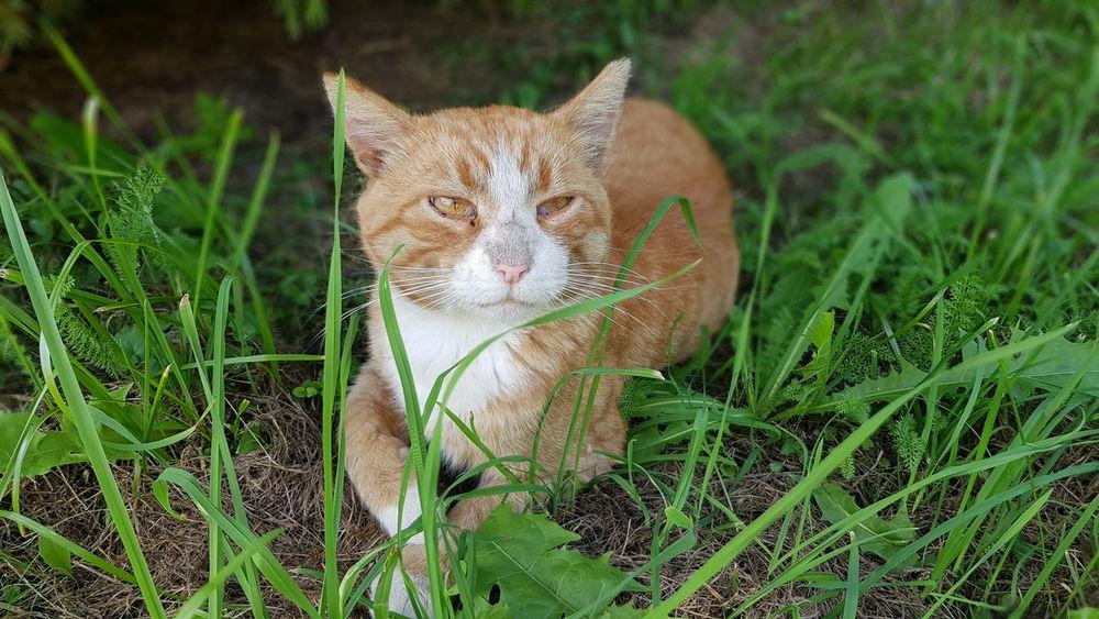 Funny orange cat. The Week On EyeEm EyeEmNewHere Domestic Animals Domestic Cat Animal Themes Cats Cat Cat Eyes Cat Watching Catholic Cattle