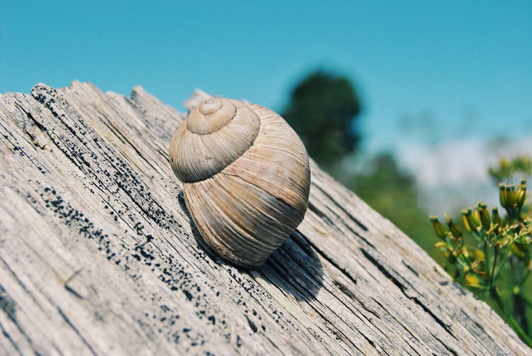 Animal Shell Animal Themes Animals In The Wild Blue Sky RePicture Growth Close-up Detail EyeEm Nature Lover Focus On Foreground Ground Natural Pattern Nature Nature_collection Macro Beauty One Animal Selective Focus Shell Sky Snail Summer Texture Textures And Surfaces Wildlife Wood Landscapes With WhiteWall