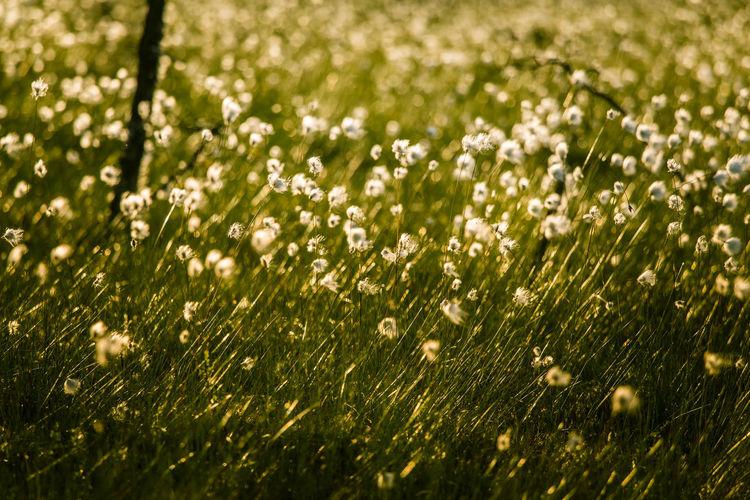 White Flowering Plants In Field