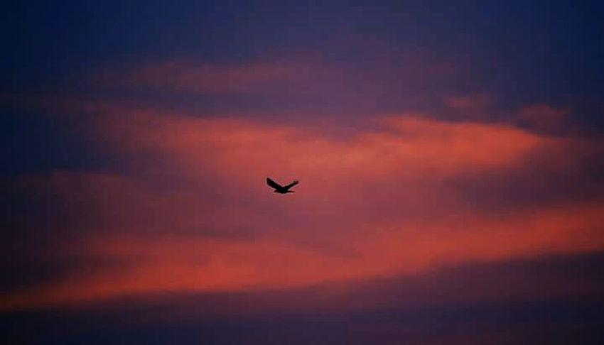 Bird returning at sunset