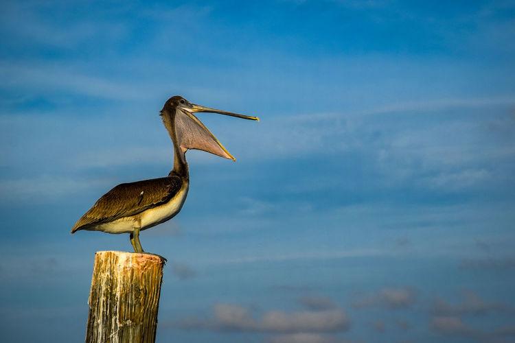 Bird perching on wooden post