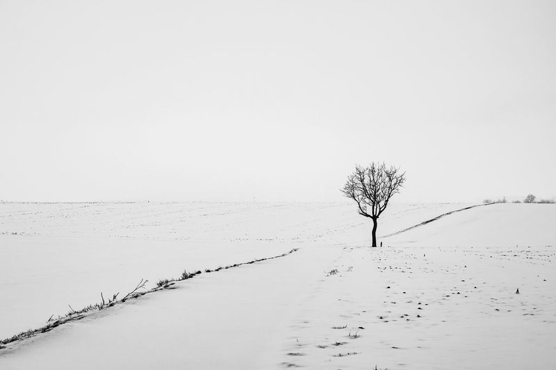 Winter Cold Temperature Snow Tranquility Tree Beauty In Nature Tranquil Scene Sky Land Scenics - Nature Environment Landscape Field Nature Plant Clear Sky Copy Space Bare Tree No People Isolated Outdoors
