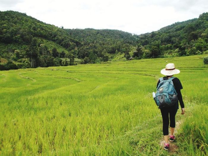 Trekking in Chiang mai Rear View One Person Only Women Cloud - Sky Agriculture Nature Full Length Field Leisure Activity Green Color Walking Day Landscape Me My Camera Love Photograph