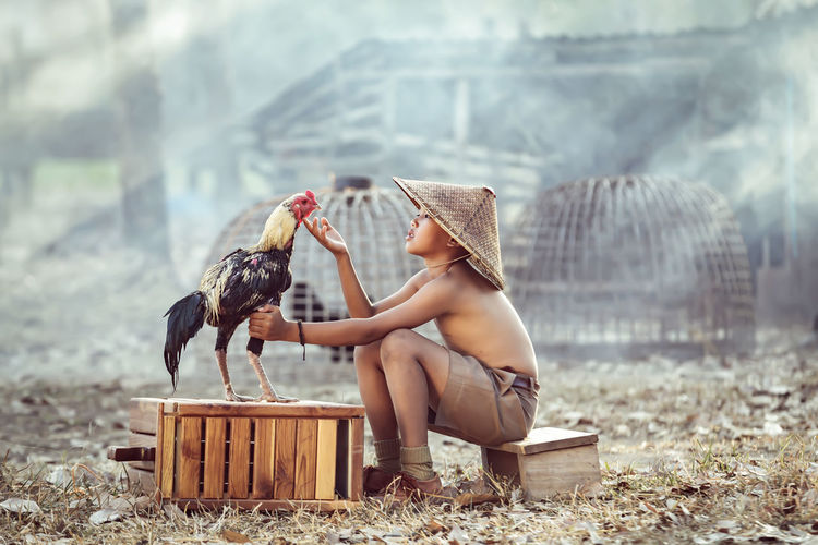Boy looking at rooster while sitting outdoors