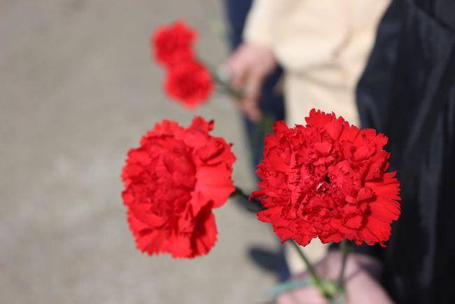 9мая 9may 9мая Flower Flowering Plant Plant Red Freshness Focus On Foreground Fragility Vulnerability  Selective Focus