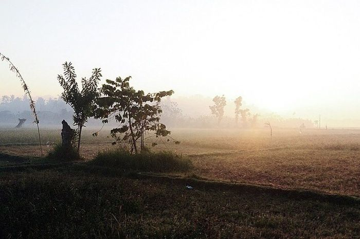 Yehkuning Bali Balinesse Ricefield Village Life Sunrise Check This Out Hello World Relaxing Enjoying Life
