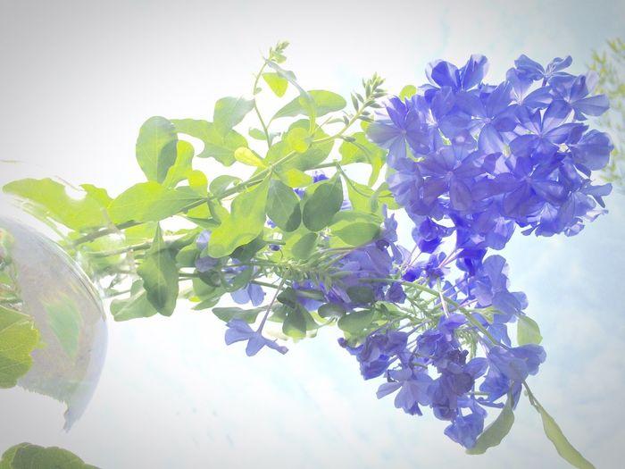 夢 Flower Plant Check This Out Iphonephotography Dreamy Blue Greenary Autumn Daydream Fragility September 2016