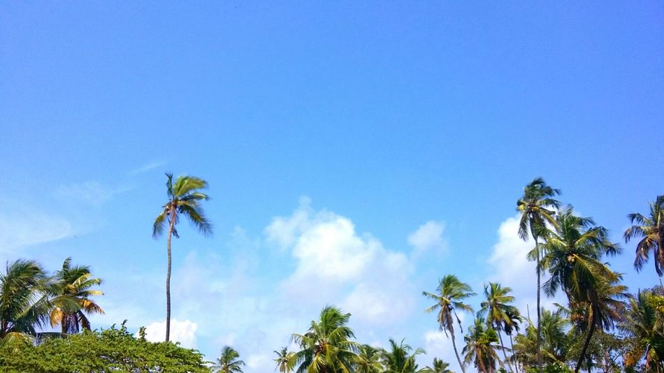 FoR EvErY..DaRk ..NigHt.. 🌃 ThErE's.. A BriGhTeR..DaY..🌞🌴🌳☁ Nature SenDinG To ALL FriEnDs..in EyeEm.. A LiTtlE..SuShiNe.. GeNtLe BrEeZe.. .AnD ..ALL ThE..FresHnEss..FoR A BriGhT Day.. 😊 FroM... My KeRaLa 🌴🌴🌴 Blue Sky Coconut Palm Tree Tranquility EyeEm Nature Lover EyeEm Best Shots - Nature EyeEm Gallery Eyeem Market EyeEm Masterclass First Eyeem Photo Eyeemphotography Fine Art EyeEm Best Shots Hello World Check This Out Ladyphotographerofthemonth Capture The Moment Beauty In Nature Still Life Autumn Getting Creative My Country My Pride Kerala