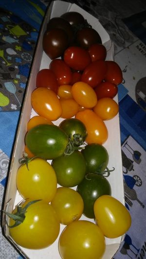 Eyemcolorphotos Pomodori Fantasia Di Colori Tomatoes Fantasy Colors