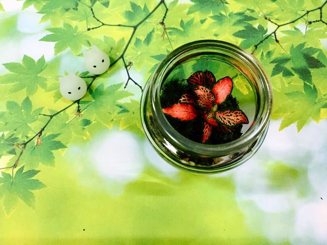 Terrarium🍀 Nature Growth Green Color Fruit Food Leaf No People Freshness Healthy Eating Plant Beauty In Nature Day Close-up Outdoors Animal Themes Fragility Water Flower Head